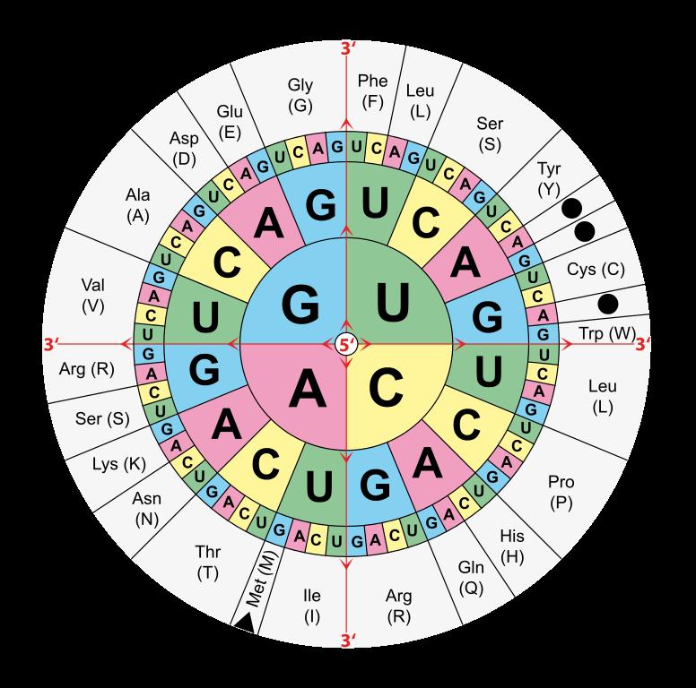 d50bc52c0635 Наши гены определяют нейрофизиологическую и энергетическую архитектуру  нашей нервной системы, и как следствие, все основные принципы и алгоритмы  ...